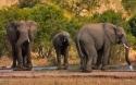 ЮЖНА АФРИКА с Национален парк Крюгер – Зимбабве с водопада Виктория – Ботсвана с Национален парк Чобе - транзит през Замбия!